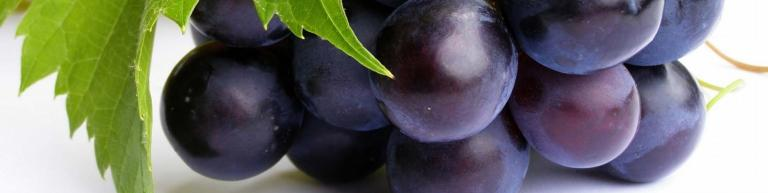 Grape Exports